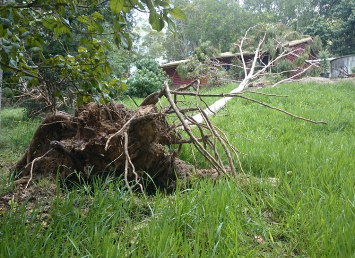 Storm Damage Tree
