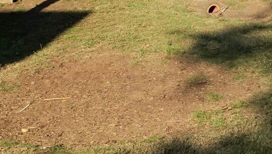 Gympie Stump Grinding