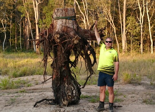 Stump & Roots